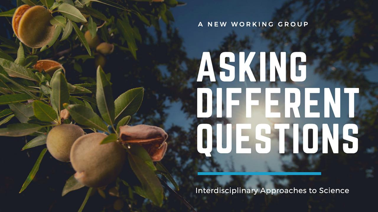 Asking Different Questions banner: text over image of sunlight through almond tree branches